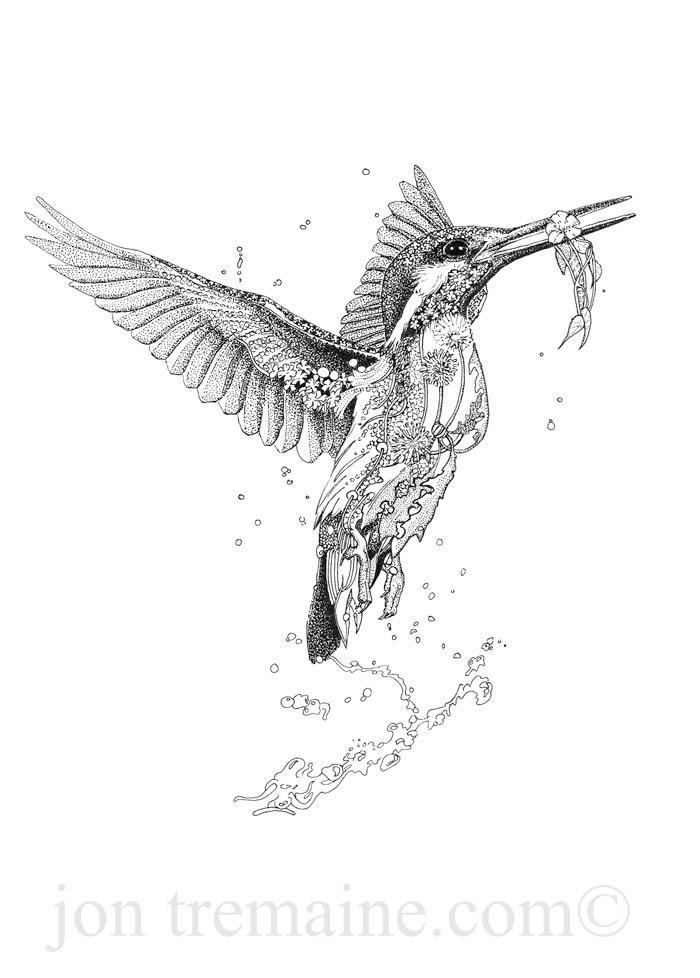 Line Drawing Kingfisher : Kingfisher