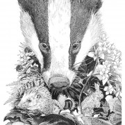 Portrait Ltd Badger_2