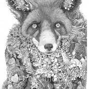 Portrait Ltd Fox_3