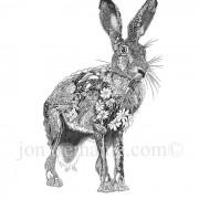 Portrait Ltd Hare Stand_2