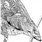 Portrait Ltd Heron 01_2