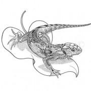 sand-lizard