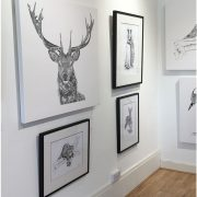 Red deer Gallery Canvas